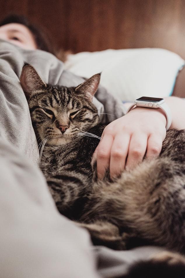 Stress Relief Pet Travel